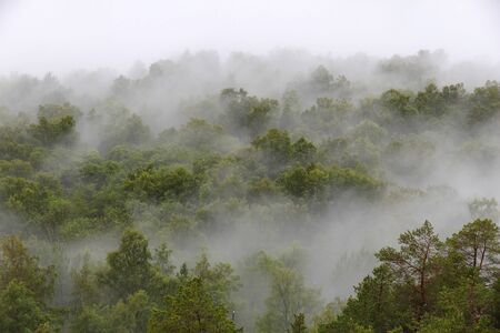 aerial view: Misty forest in Norway - spooky mist landscape. Stock Photo