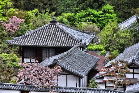 todaiji: Todaiji Temple grounds in Nara, Japan. Japanese landmark. Editorial