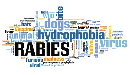 rabies: Rabies - viral disease of humans and animals. Health care word cloud.
