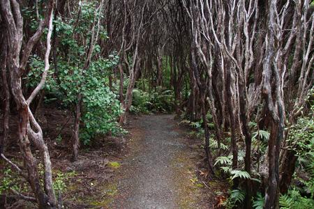 aotearoa: New Zealand nature. Endemic native bush - rata forest at Bluff.
