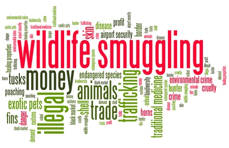 smuggling: Wildlife smuggling - environmental crime issues and concepts word cloud illustration. Word collage concept. Stock Photo