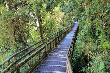 boardwalk trail: Argentina jungle hiking trail - canopy boardwalk in Iguazu National Park.