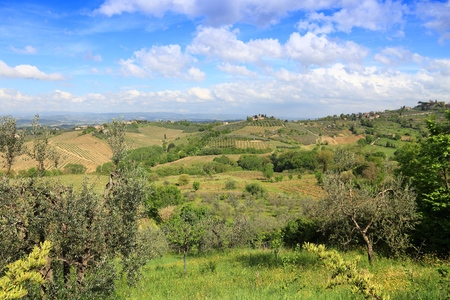 Vineyards and olive groves in Tuscany - rural Italy. Agricultural countryside area in the province of Siena.