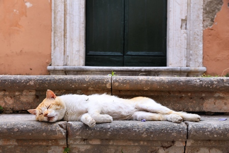 cat island: Cat in Greece - Corfu Island sleeping ginger white cat. Stock Photo