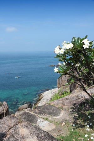 surat: Thailand, Southeast Asia - Koh Tao island in Surat Thani province. Plumeria obtusa flowers. Stock Photo