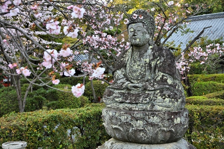ninnaji: Buddha statue - old stone sculpture and cherry blossom flowers at Ninna-ji Temple in Kyoto, Japan.
