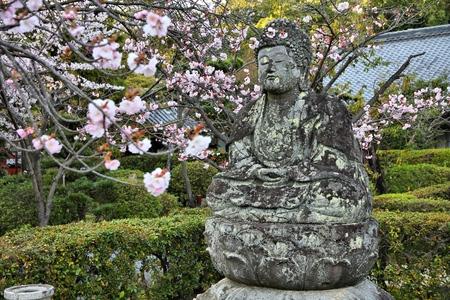 ninnaji: Buddha statue - old stone sculpture and cherry blossom flowers at Ninna-ji Temple in Kyoto, Japan.