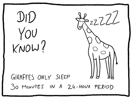 Animal facts about giraffe - fun trivia cartoon doodle concept. Newspaper funny comic fact. Illustration