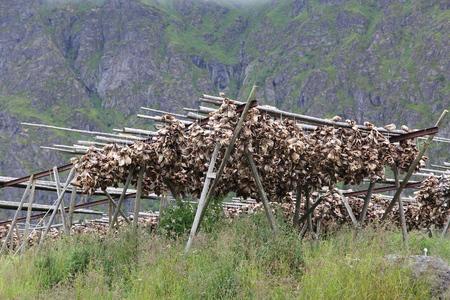 stockfish: Dried fish in Norway - sun dried cod head stockfish in Lofoten. Traditional Norwegian cuisine. Stock Photo