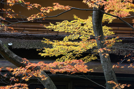 koyo: Traditional Japanese garden in autumn - Isuien Garden of Nara, Japan.