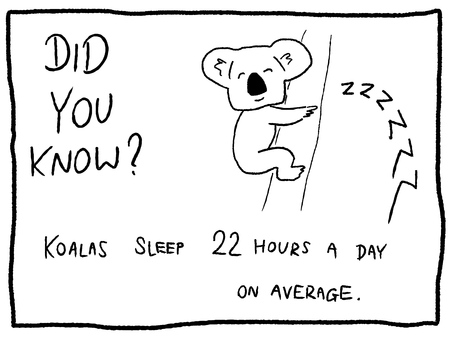 Koala sleep - fun trivia cartoon doodle concept. Newspaper funny comic fact.