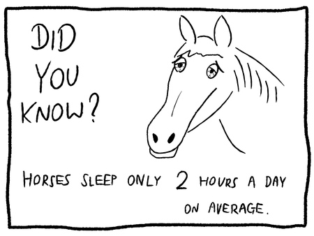 Animal fact, horse sleep - fun trivia cartoon doodle concept. Newspaper funny comic fact.
