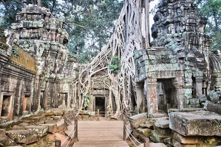 Angkor temple in Cambodia. Jungle temple ruin of Ta Prohm.