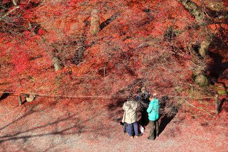 momiji: KYOTO, JAPAN - NOVEMBER 24, 2016: People visit Nanzenji temple garden in Kyoto, Japan. 19.7 million foreign tourists visited Japan in 2015. Editorial