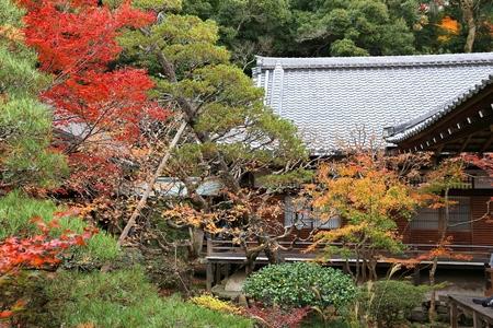 momiji: Kyoto, Japan - autumn leaves at Eikando Zenrinji temple.