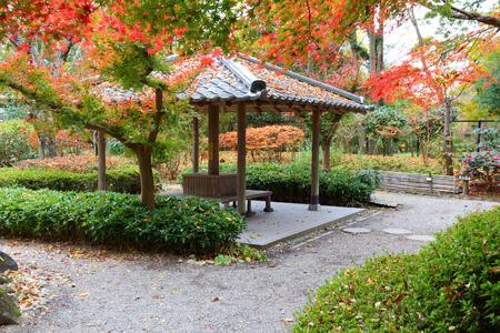 Autumn foliage in Japan - red momiji leaves (maple tree) in a Japanese tea garden of Yoshikien, Nara, Japan.