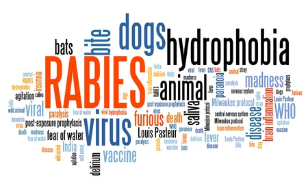 Rabies - viral disease of humans and animals. Health care word cloud.