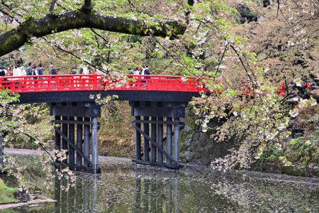 HIROSAKI, JAPAN - MAY 4, 2012: People enjoy cherry blossoms (sakura) in Hirosaki. Annual Cherry Blossom Festival is held in Hirosaki from April 23 to May 5.