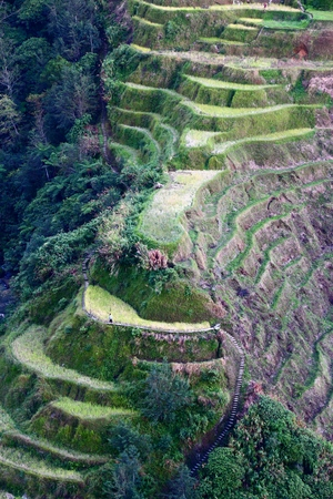 Philippines rice terrace landscape - rice cultivation in Banaue.