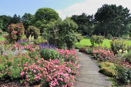 Dortmund, Germany. Rose flower garden in Westfalenpark. 写真素材