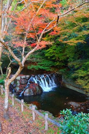 Autumn foliage in Minoo near Osaka, Japan. 版權商用圖片
