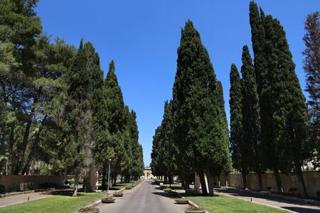 Lecce, Italy - cypress tree lined alley leading to Cimitero Monumentale (Monumental Cemetery).