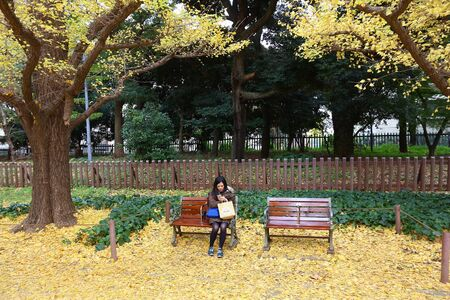 TOKYO, JAPAN - NOVEMBER 30, 2016: People visit Ginkgo Avenue autumn foliage in Tokyo, Japan. Icho Namiki Avenue is famous for its admiration of autumn leaves.