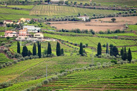 Douro valley. Portugal vineyard countryside landscape. Alto Douro DOC wine making landscape.