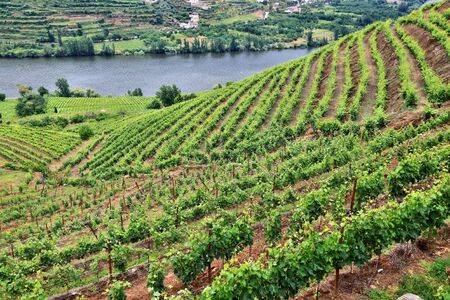 Portugal vineyard countryside landscape. Hills along Douro river valley. Alto Douro DOC wine making landscape. Stock fotó