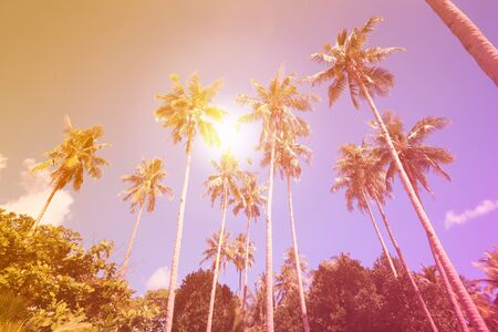 Palm trees background. Vintage style tropical texture, 90s retro filter. Banque d'images