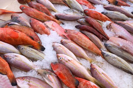 Guadeloupe fish market in Pointe a Pitre, biggest city of Guadeloupe. Red snappers and sea bream.