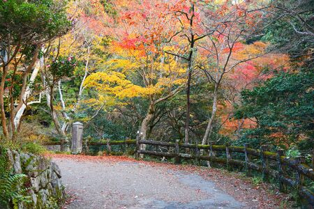 Autumn foliage in Minoo near Osaka, Japan.