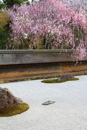 Japan zen garden and cherry blossoms in Kyoto. Zen rock garden of Ryoanji temple. Stock Photo