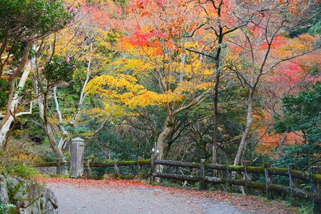 Autumn colors in Minoo Park near Osaka, Japan.