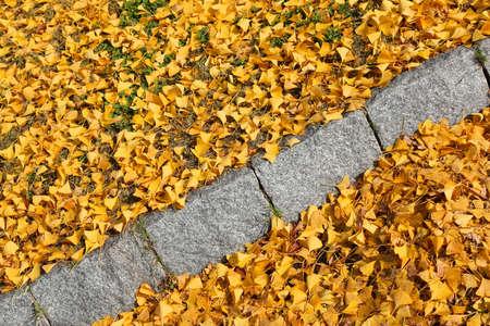 Yellow autumn ginkgo tree leaves on a sidewalk in Osaka, Japan. Fall season composition. 免版税图像