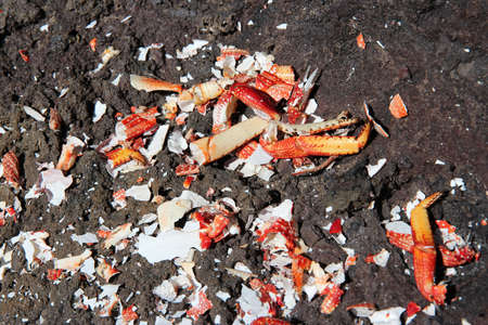 Broken crab shells remains after fishing for shellfish in Tenerife, Canary Islands.