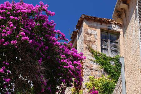Dubrovnik, Croatia. Bougainvillea flowers in Medieval Old Town.