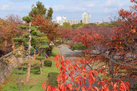 Osaka autumn park - O River sakura trees with red foliage.