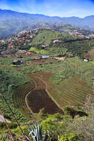 Santa Brigida (Sta Brigida) in Gran Canaria. Rural landscape. Countryside of Gran Canaria.