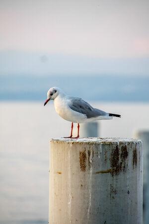 stake: seagull on a stake