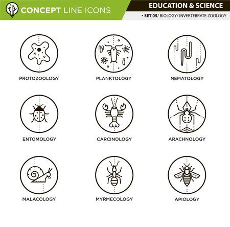 ameba: iconos de líneas de zoología de invertebrados en fondo blanco aislado utilizados para enseñanza escolar y universitaria y la decoración documento Vectores