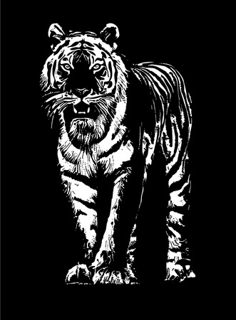 tiger drawing sketch
