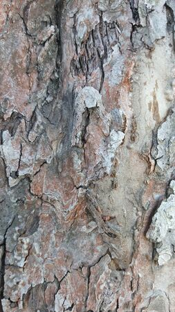 Old tree bark with cracks. Wood texture Stock Photo