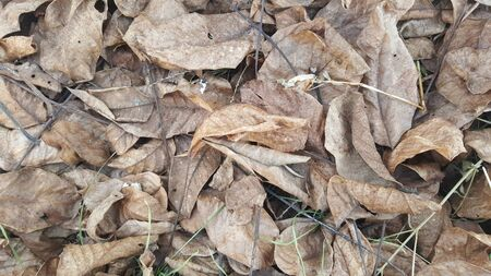 rug texture: Autumn leaves on the ground. Leaves in nature Stock Photo