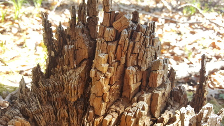 Stump rotting wood abstract texture