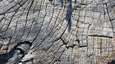 wood panel: Texture of old tree stump with cracks