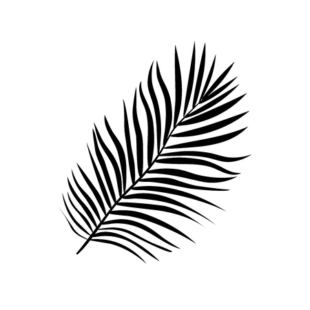 Vector illustration of realistic black silhouette tropical exotic palm tree leaves on a white background