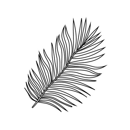 Vector illustration of black outline tropical exotic palm tree leaves on a white background