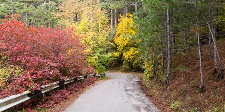 Autumn scene with road in colorful forest.