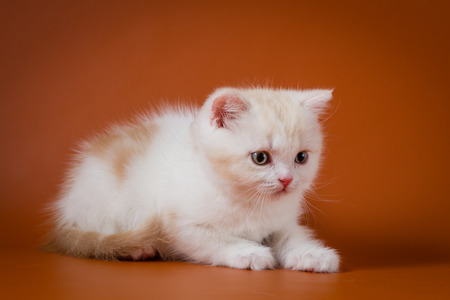 Cute red and white kitten lying on the orange background Stock Photo